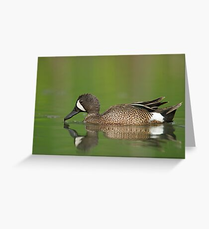 Male Blue Wing... Greeting Card