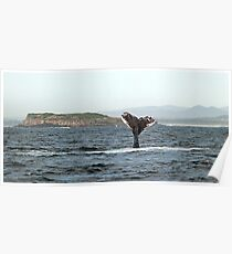 Tail flukes, mother whale #1 Poster
