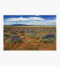 Springtime In Honey Lake Valley Photographic Print
