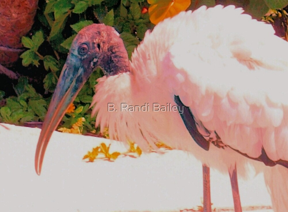 Wood stork getting refreshed by ♥⊱ B. Randi Bailey