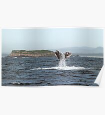 Tail Flukes, mother whale #3 Poster