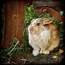 Free-ranch Rabbit by Laura Palazzolo