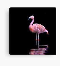 Chilean Flamingo ~ on black Canvas Print