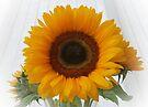 Sunflower by AnnDixon