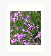Silver Studded Blue Butterfly Art Print