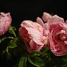 Crying With Roses...... by Sandra Cockayne