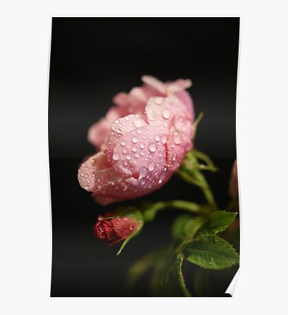 The Rose ~ And It's Bud ~ Poster