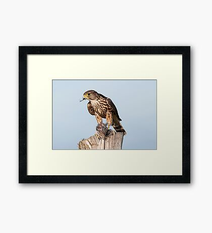 Merlin with catch Framed Print
