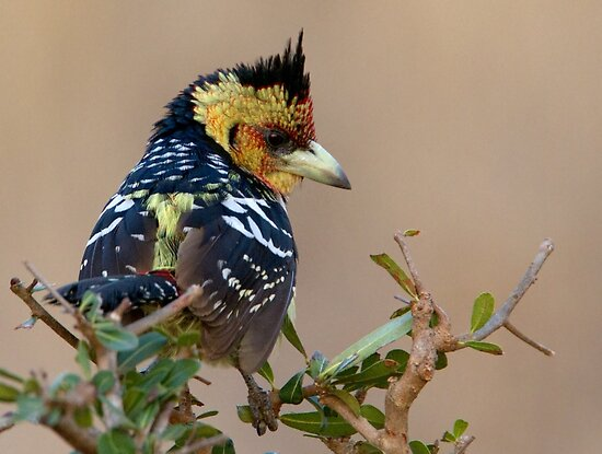 A Bad Hair Day  by Michael  Moss