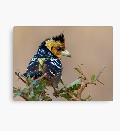 A Bad Hair Day  Canvas Print