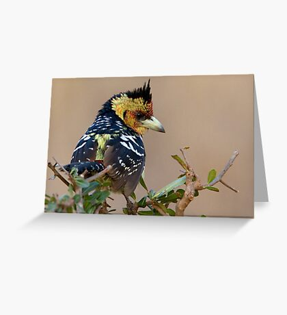 A Bad Hair Day  Greeting Card
