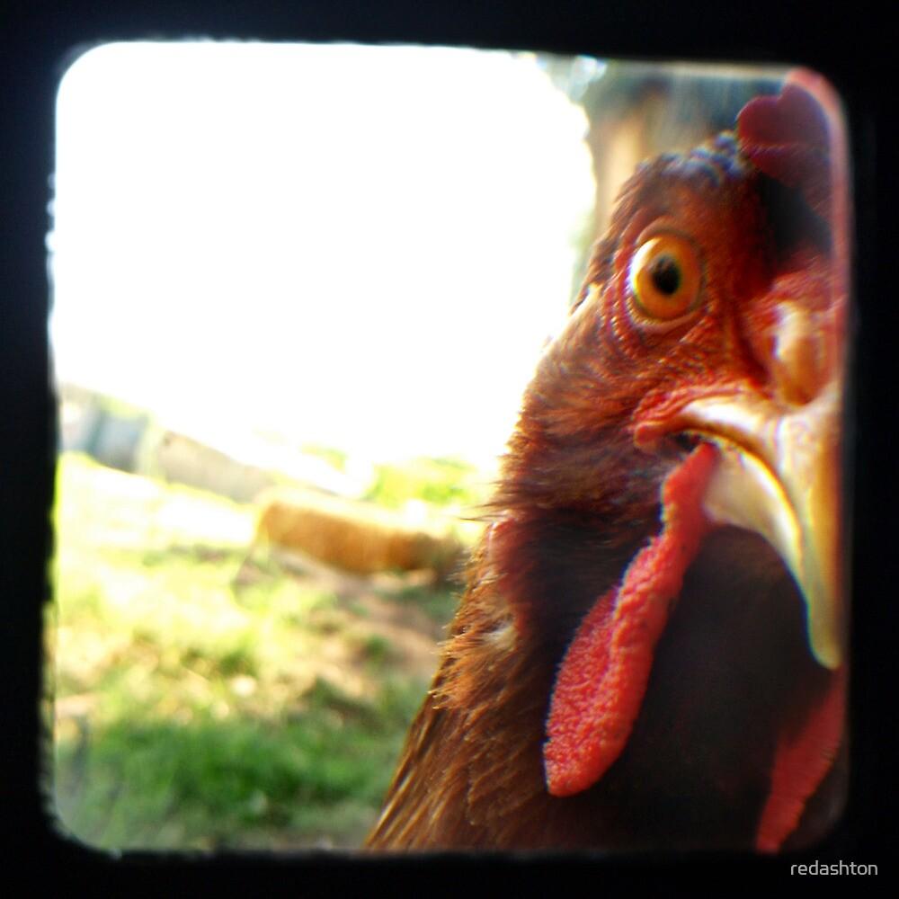 The Eye of the Beholder - Chicken Portrait by redashton
