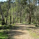 Currawong Track by SonasConcepts