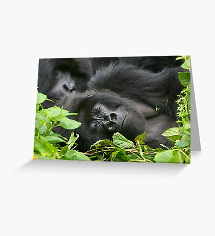 Sleeping Giant - Mountain Gorilla Greeting Card
