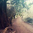 Wald von Taylorly