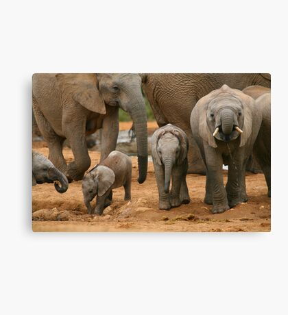 Baby African Elephants Canvas Print