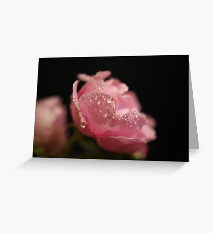~ Beautiful Weeping Rose ~ Greeting Card