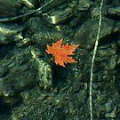 Sea Leaf by photoloi