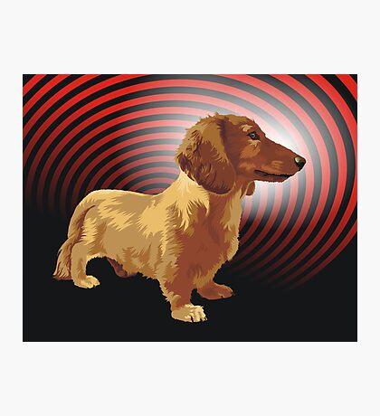 George dachshund Photographic Print