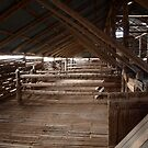 Mungo Shearing Shed by Imagebydg