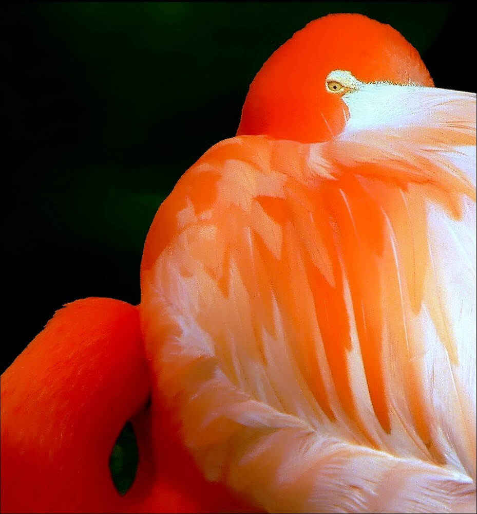 Portrait of Flamingo: Abstract by paintingsheep