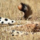 Cheetah paws & tail by loz788