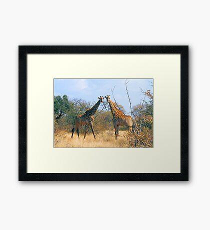 WHEN TWO FRIENDS MEET - the giraffe Framed Print