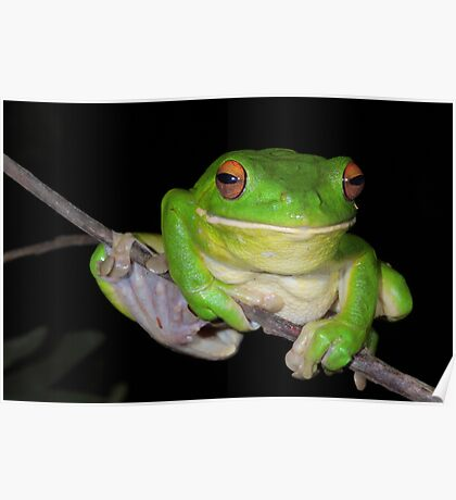 Sending You a Smile - White-Lipped Tree Frog Poster