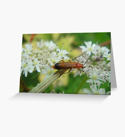 Beetlemania Greeting Card