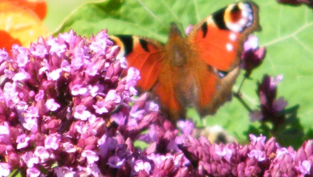 Butterfly by Brendan Brennan