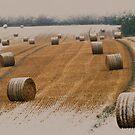 Harvest 2010 by ©FoxfireGallery / FloorOne Photography