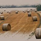 Harvest 2010 by Foxfire