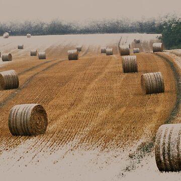 Harvest 2010 by Foxfire