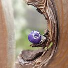Tiny Flower in a Knothole by Megan Stone