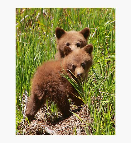 Black Bear Cubs Photographic Print
