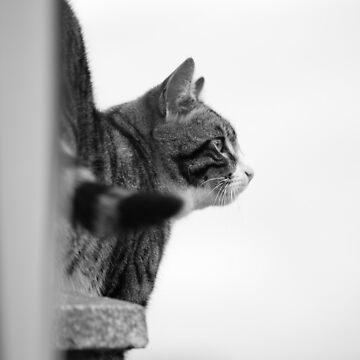 Ever vigilant by crware