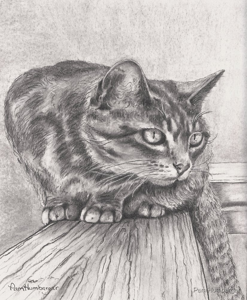 Cat on a ledge by Pam Humbargar