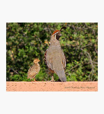 Gambel's Quail (Male) & Chick Photographic Print