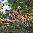 Winking leopard by jozi1