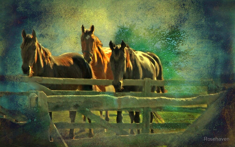 """""""Dreaming Horses..."""" by Rosehaven"""