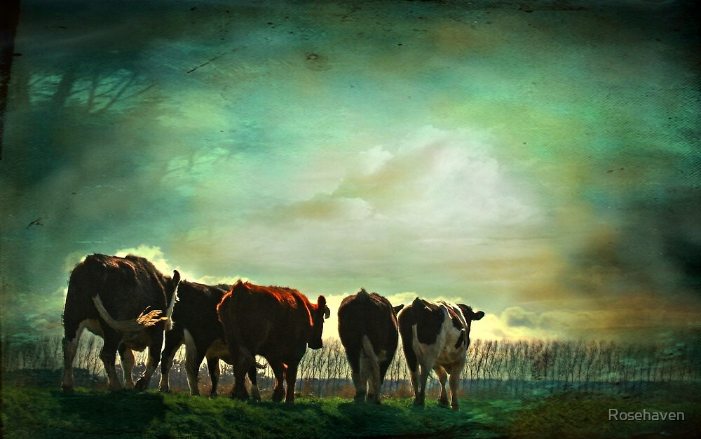"""""""Off to Greener Pastures ..."""" by Rosehaven"""
