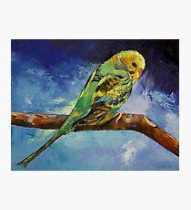 Wild Parakeet Photographic Print