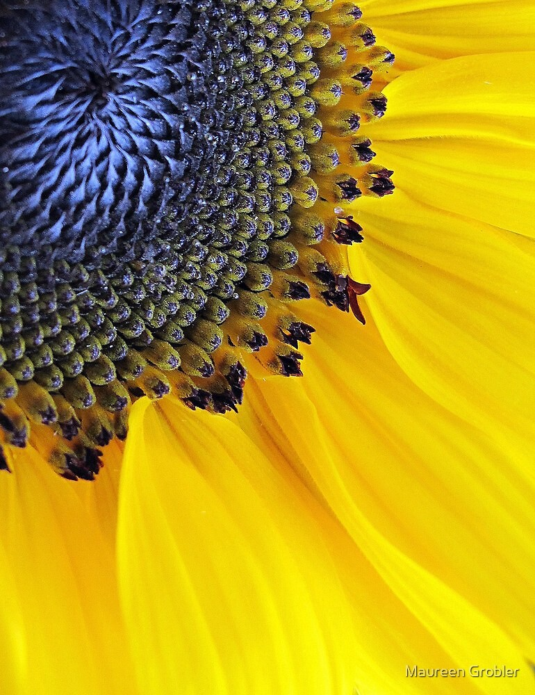 A cup of sunshine  by Maureen Grobler