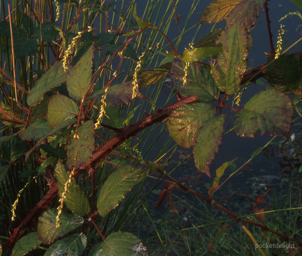 Blackberry Leaves 1 by pocketdelight