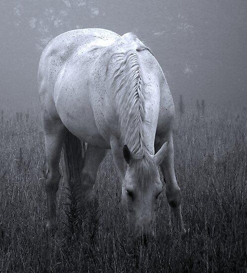 Beauty in the mist by Gary Power