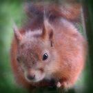 Close Encounter With Squirrel by hurmerinta