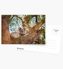 Chilling Koala Postcards