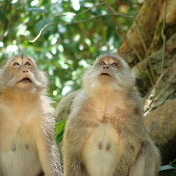 Monkey Couple  by Gosy