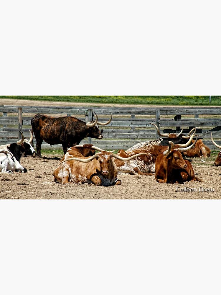 Longhorns by colgdrew