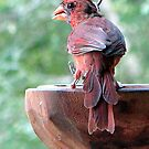 The Cardinal Pose by DottieDees